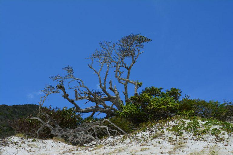 ilha-do-farol-arraial-do-cabo